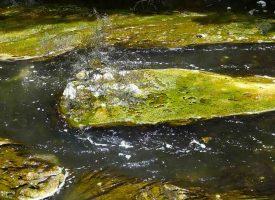 Geheimtipp Thermalwasser
